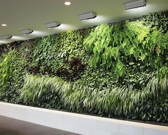 projetos-paredesverdes